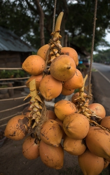 King coconut, our favourite roadside refreshment