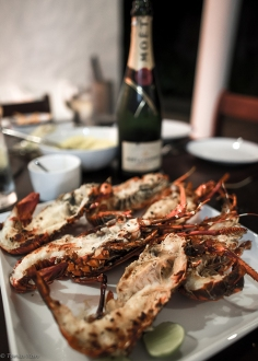 Grilled local lobster