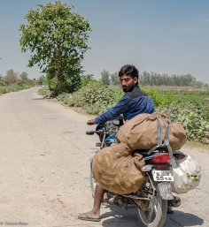 Cucumber farmer, Jagatpur Bund