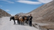 ladakh2016-small-9387